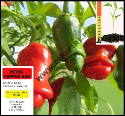Planta Petter Pepper