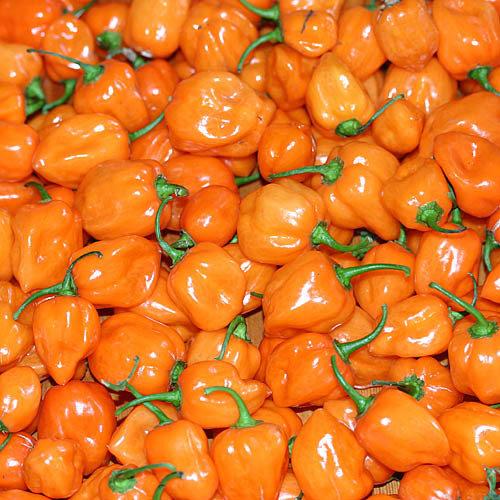 Habanero Orange 100gr