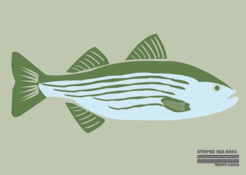 Striped Sea Bass Flag