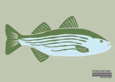 Striped Sea Bass Flag