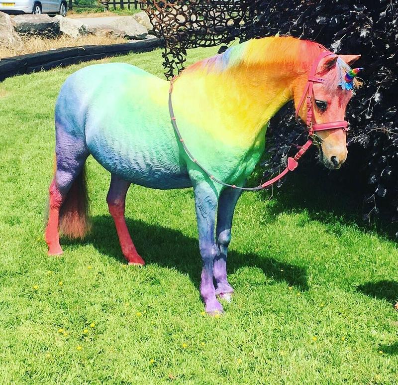 Rainbow unicorn & glitter kit