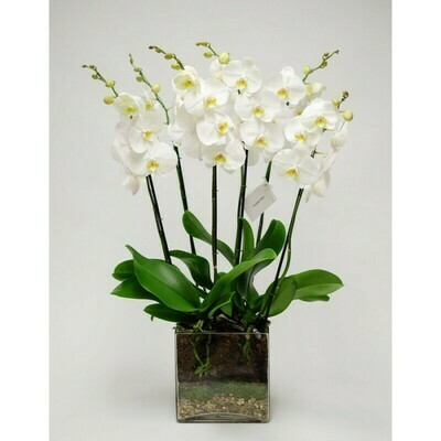 cesto 4 orchidea bianca