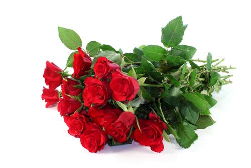 LOVE in FLOWER 12 ROSE