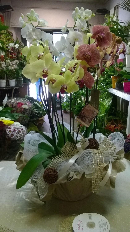 Cesto orchidea multicolor