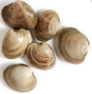 ASARI CLAMS - JAPAN - $8.50 PER 500 GMS PACK