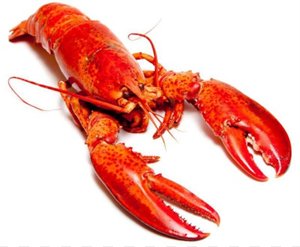 BOSTON LOBSTERS - $19.00 PER PIECE