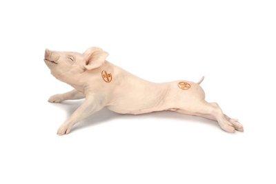 SUCKLING PIG SPAIN $3.80 PER 100 GMS