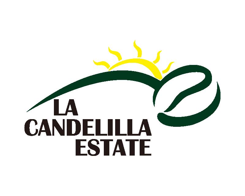 哥斯大黎加 小燭莊園 帝比卡 水洗