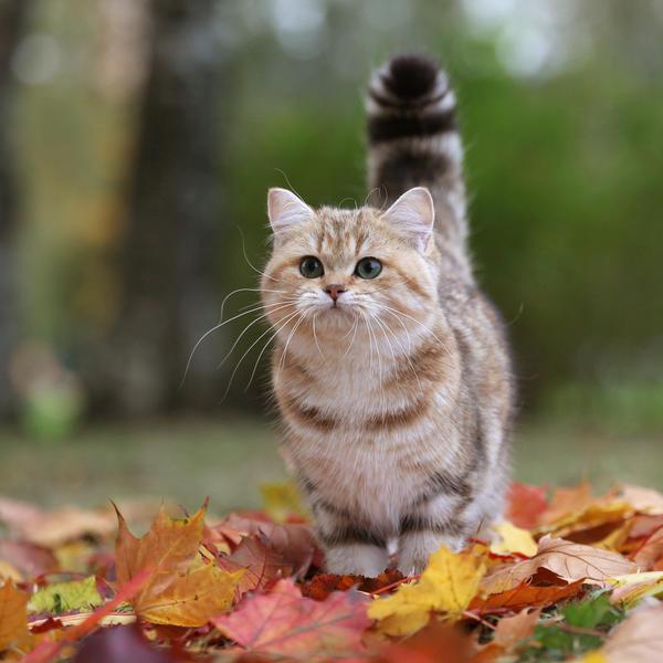 Tess: Кошачьи открытки (#2)