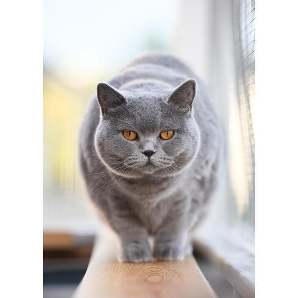 Tess: Кошачьи открытки (#4)