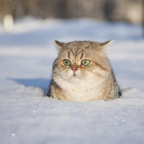 Tess: Кошачьи открытки (#5)