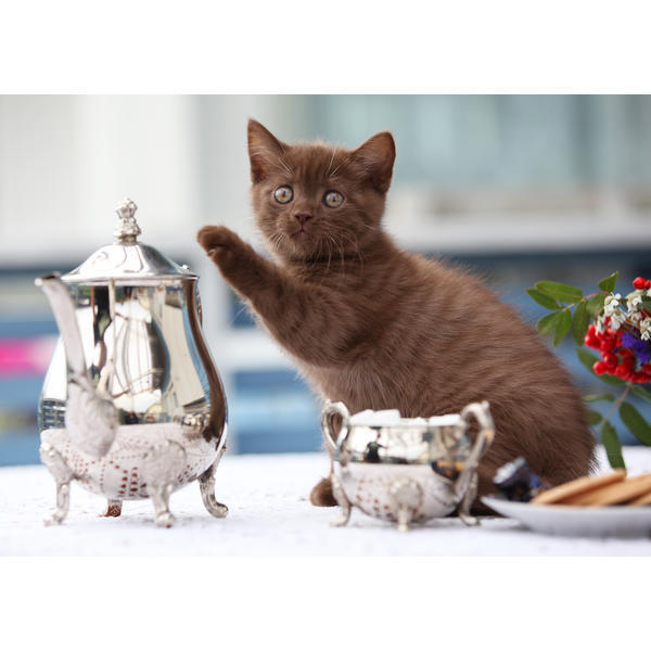 Tess: Кошачьи открытки (#7)