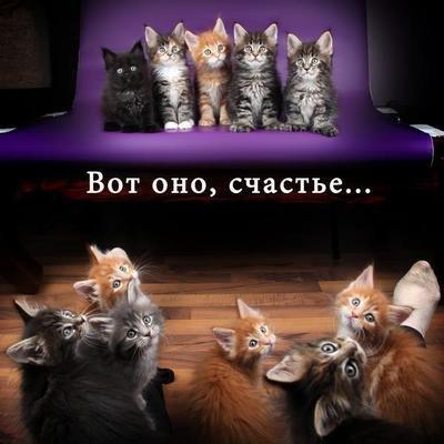 Tess: Кошачьи открытки (#3)