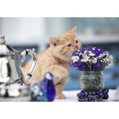 Tess: Кошачьи открытки (#6)