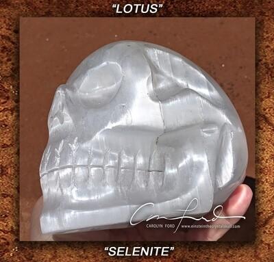 SELENITE Crystal Skull, Einstein Imprinted,
