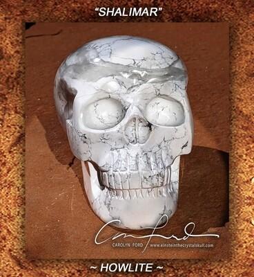 HOWLITE, Einstein Imprinted Skull