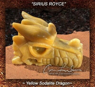SODALITE  (yellow)~Dragon, Einstein Imprinted,