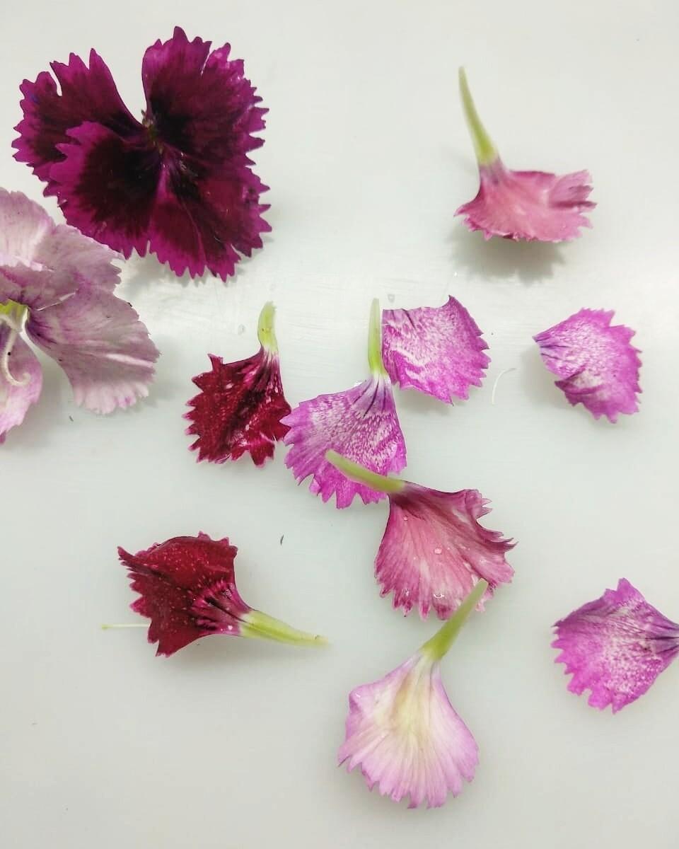 Квіти гвоздики 40шт