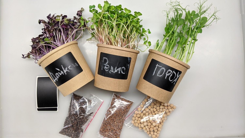 Набір для вирощування мікрозелені (6 врожаїв)