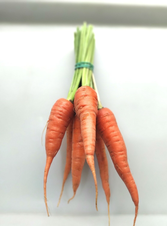 Морква молода пучок, 6шт