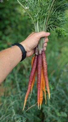 Морква молода кольорова пучок