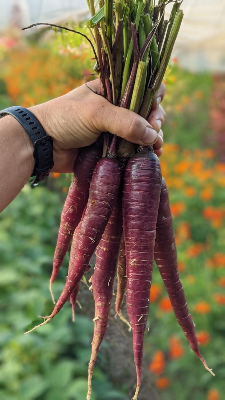 Морква фіолетова 1кг