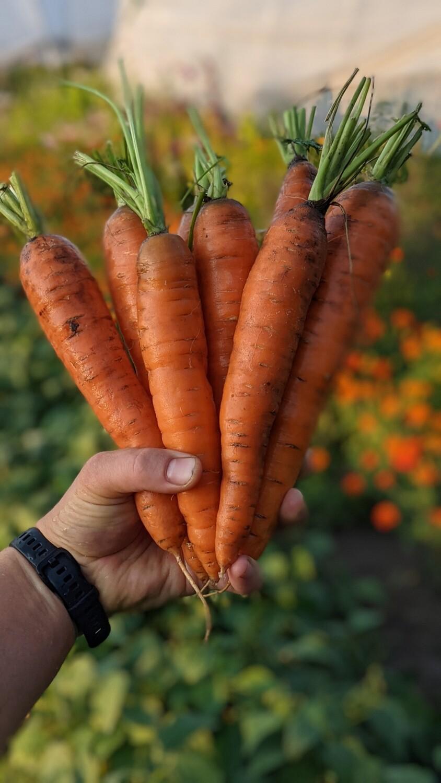 Морква 1 кг