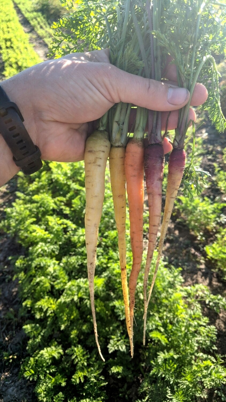 Морква бебі різнобарвна 300г