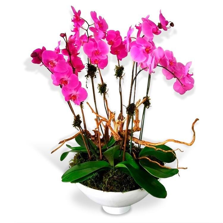 Arreglo Floral de Orquídeas   DELICADO