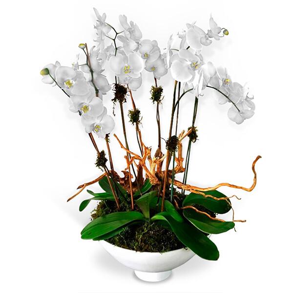 Arreglo Floral de Orquídeas  Blancas   DELICADO