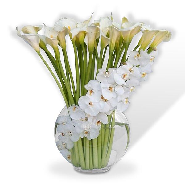 Orquídeas y Lindos Alcatraces   PUREZA