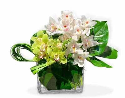 Sofisticadas Orquídeas Cymbidium|  FLORENCIA