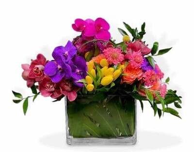Orquídeas, Tulipanes y Rosas  |  LIVORNO