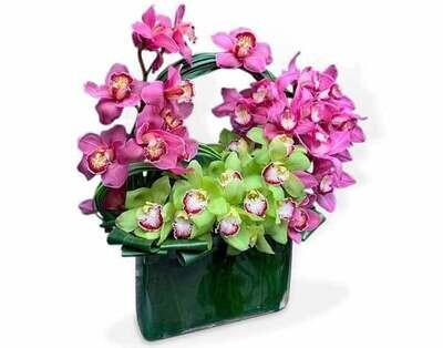 Maravillosas Orquídea Dendrobium  |  AREZZO