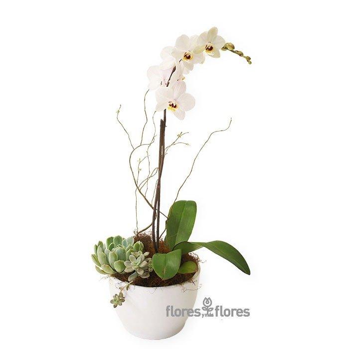 Planta de Orquídea Blanca- 90 MIN   DREAM