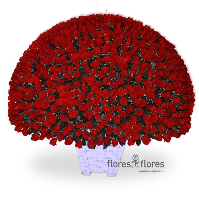 Mil Rosas Rojas  | CAROLINA