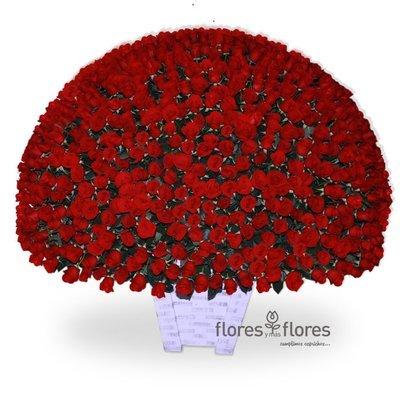 Mil Rosas Rojas    CAROLINA