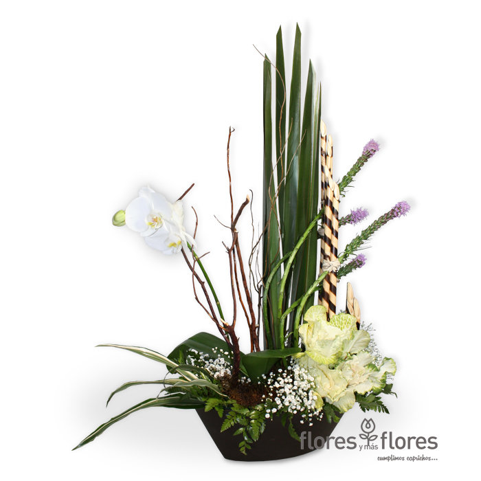 Hermosa Orquídea Phalaenopsis  |  GALA