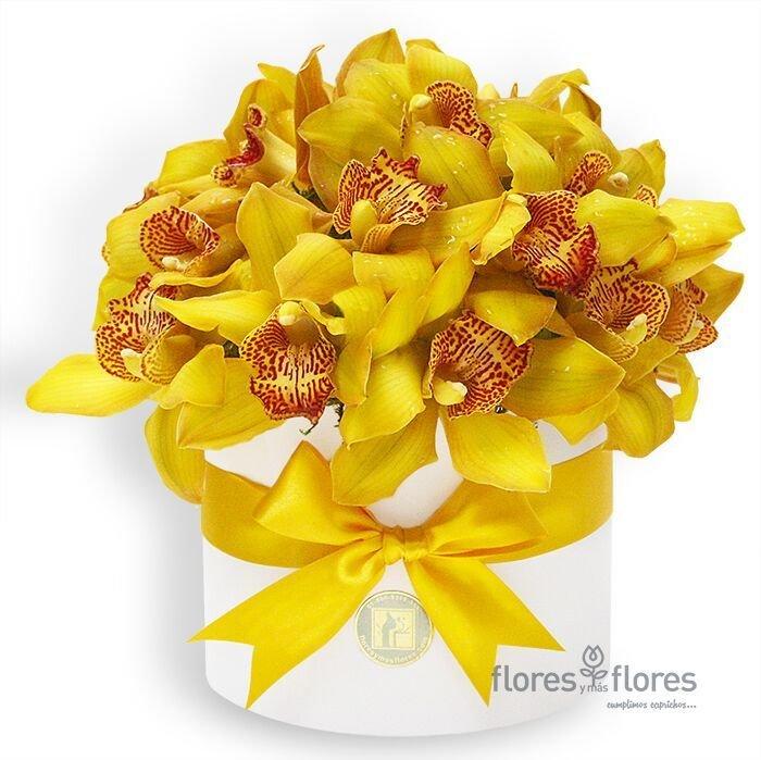 Bouquet Orquídeas Cymbidium Amarillas en Caja | AMELIE