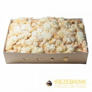 Day Old Chicks (approx 250) *10kg BOX*