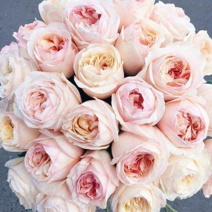 31 роза Дэвид Остин
