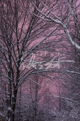 Valentine Sky