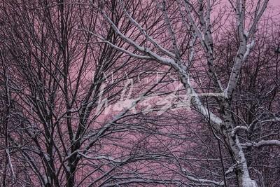 Valentine Sky II
