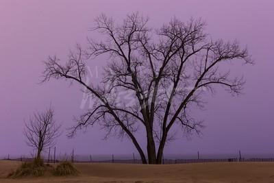 North Beach Tree