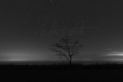 Pondering Tree