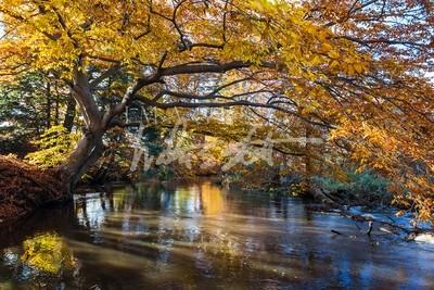 Hemlock Crossing Fall II