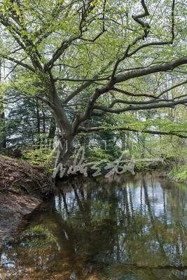 Hemlock Crossing Spring