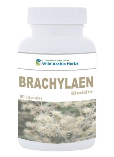Brachylaen - Bladder