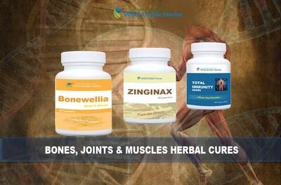 Bones & Muscles Full Pack
