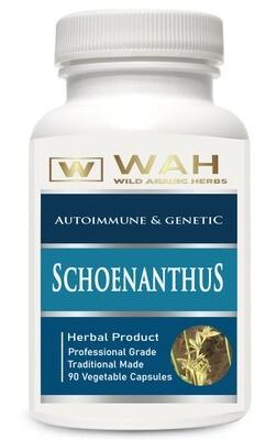 Schoenanthus